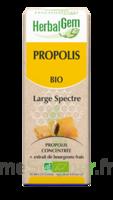 Herbalgem Propolis Large Spectre Solution Buvable Bio Fl Cpte-gttes/15ml à Auterive