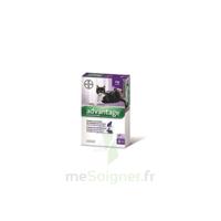 Advantage 80 Solution Application Locale Lapin-chat Moins 4kg 4 Pipettes/0,4ml à Auterive